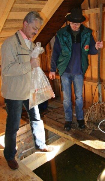 """<p class=""""artikelinhalt"""">Tierparkchef Jochen Gerlach und der 2. Bürgermeister Klaus Espig (l.) setzen symbolisch die letzten beiden Goldorfen ins Kaltwasserbecken ein. </p>"""