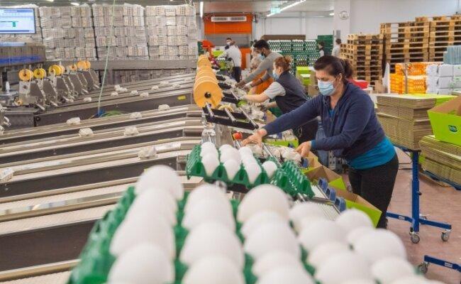 Die Firma Eifrisch in Neukirchen muss in der Coronapandemie auch noch auf die Gefahren der Geflügelpest reagieren.