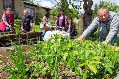 Wolfgang Rehatschek in der Gartenanlage Am Glockenberg in seinem Element: Er erklärt beispielsweise, wie Erdbeeren durch Mischkultur mit Zwiebeln oder Knoblauch gesund bleiben.