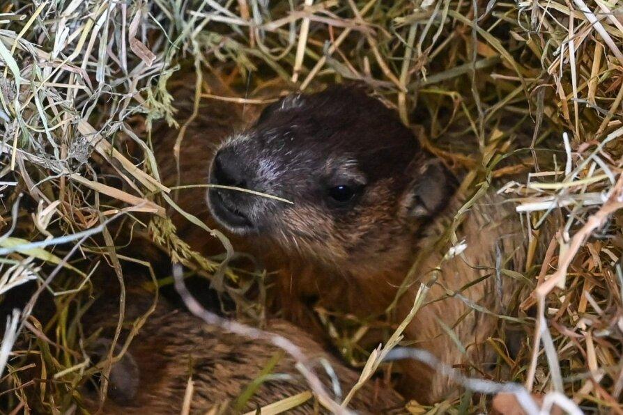 Weiterer Nachwuchs im Amerika-Tierpark Limbach-Oberfrohna