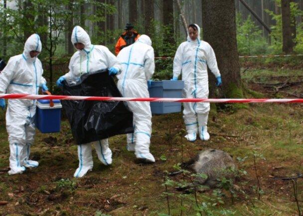 Das Vorgehen bei einem Ausbruch wurde im August 2018 bei einer Tierseuchenübung im Waldschulheim Conradswiese durchgespielt.