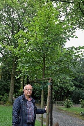 Friedhofsverwalter Uwe Horn an einer Winterlinde, die dank einer Baumspende geplanzt werden konnte.