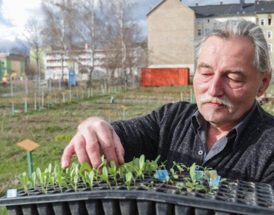 Mathias Höppner vom Saatgutgarten zeigt eine Schale mit Wildblumensetzlingen. In der Anlage werden 50 Blumen-, Stauden- und Kräuterarten gezüchtet.