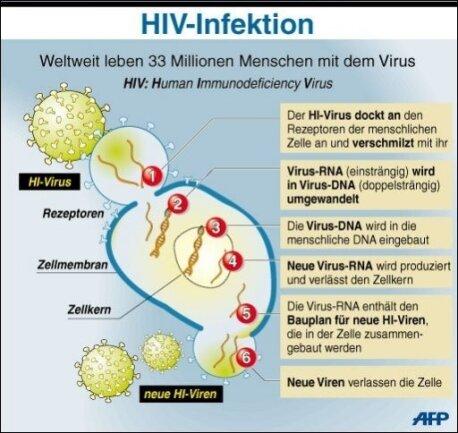 Wissenschaftler haben einen Durchbruch bei der Suche nach einem Impfstoff gegen das Immunschwächesyndrom Aids gemeldet.