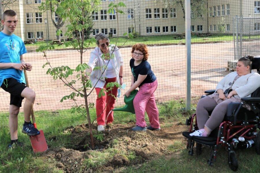 Der kleine Kastanienbaum soll zum Schattenspender heranwachsen. Das Bäumchen wurde von der Flöhaer Einwohnerin Gudrun Möhring (2. von li.) zur Verfügung gestellt. Gudrun Möhrings Enkelin Charlotte (2. v. re.) hat gegossen. Förderschüler Nick (li.) half beim Pflanzen. Kim schaute zu.