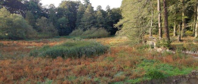 Gräser und Schilf sollen entfernt werden, bevor der Teich wieder befüllt werden kann.