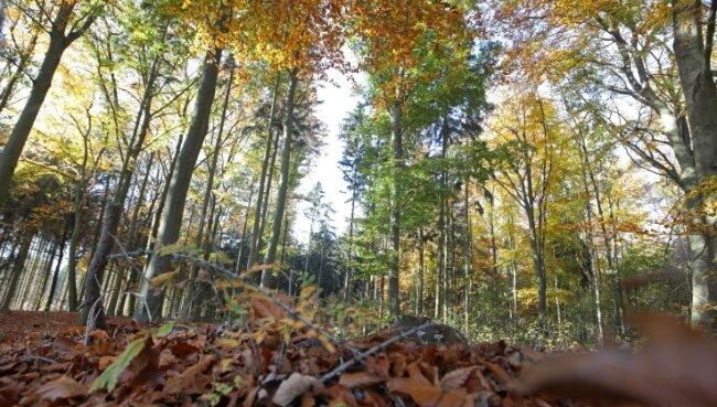 Wer nicht die kleinen Schilder an den Bäumen sieht, würde beim Spaziergang durch den Wald kaum erkennen, dass es sich um einen Friedwald handelt.