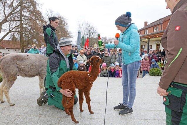 Clara Zindler aus Erlangen, die derzeit ihr Oma besucht, hat das Alpaka-Mädchen im Tierpark Hirschfeld auf den Namen Clara getauft.