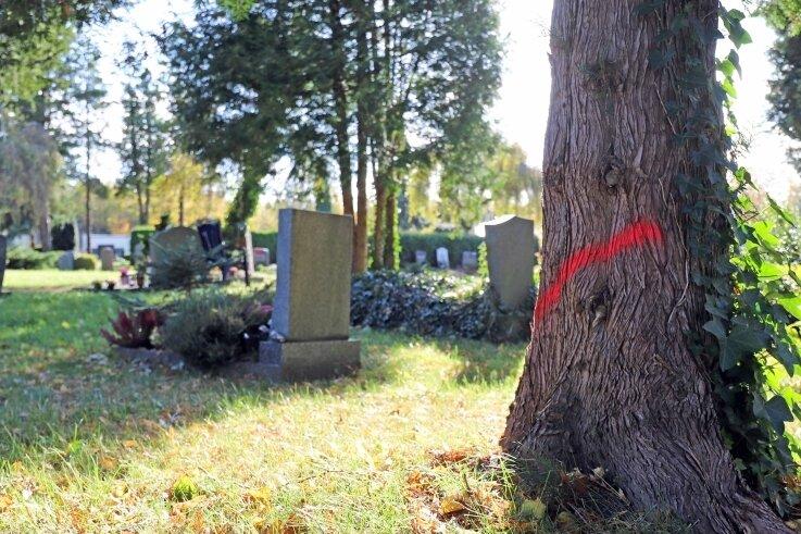 Farbige Markierungen bezeichnen die Bäume, welche auf dem Donatsfriedhof in Freiberg abgeholzt werden sollen.