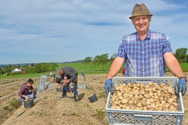 Ulrich Gündel mit der Urkartoffel Bonita ojo de Perdiz - die am Samstag auf dem Feld fleißig gelesen wurde.