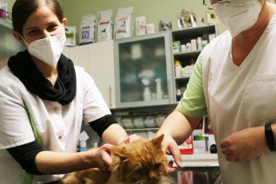 Tierärztin Dr. Jana Seidel (links) und Tierarzthelferin Nadine Schade behandeln in der Weischlitzer Praxis Kater Fuchs.
