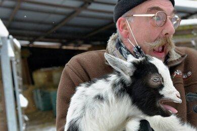 """Da ist Tierparkleiter Peter Heinrich doch glatt von dem am 1. Januar geborenen Zwergziegenböcklein gebissen worden. """"Und das Zicklein, das hat Zähne, und die trägt es im Gesicht - und die Zähne sieht man nicht!"""", sagte er schmunzelnd nach dem ersten Schreck."""