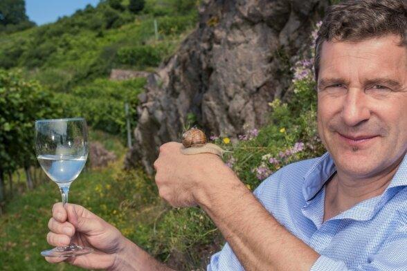 Wein und Weinbergschnecke: Winzer Martin Schwarz liebt die Arbeit im Weinberg.