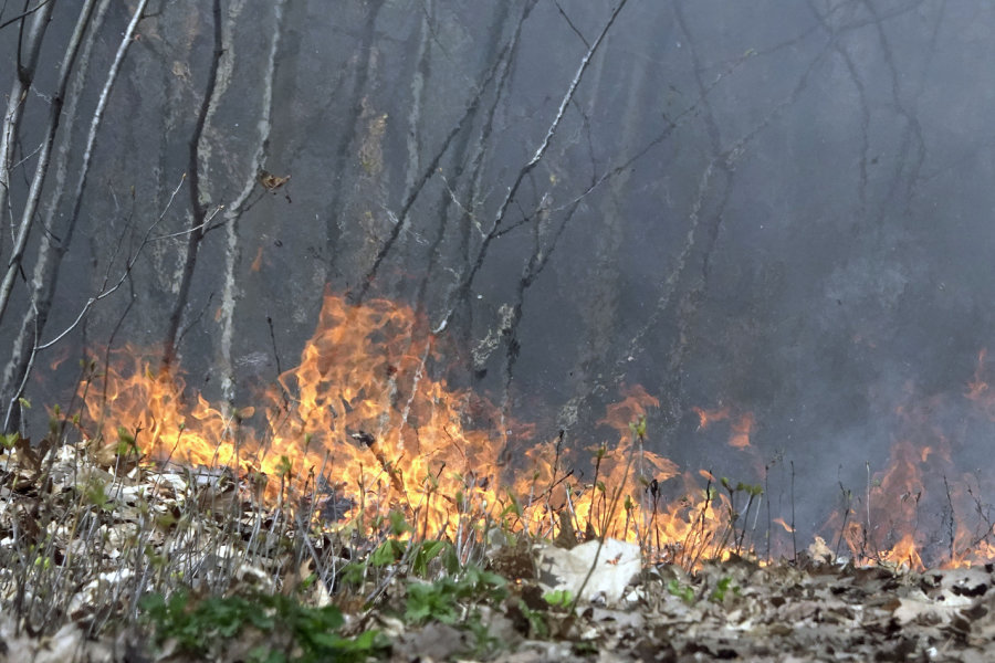 Feuer im Kommunalwald