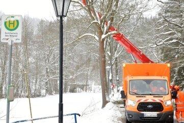 Wegen Baumpflegemaßnahmen ist in dieser Woche die Ortsverbindungsstraße zwischen Mulda und Dorfchemnitz gesperrt. Im Bild Mitarbeiter der Straßenmeisterei Mittelsachsen beim Verschnitt von Straßenbäumen.