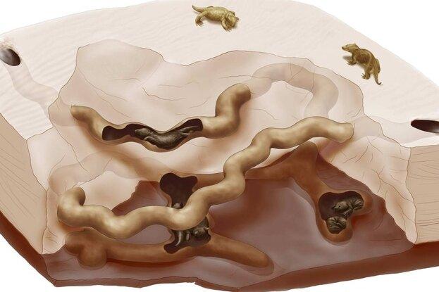 """<p class=""""artikelinhalt"""">Dieses Modell von der unterirdischen Behausung der Dino-Erdmännchen haben die Wissenschaftler nachgebildet.</p>"""