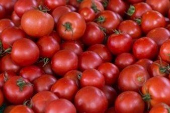 Knallrot und saftig - Fünf Tipps für prächtige Tomaten aus dem Garten