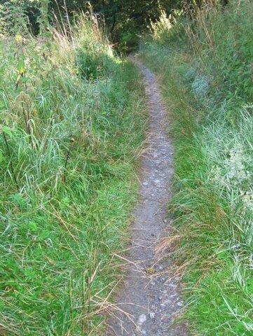 """<p class=""""artikelinhalt"""">Das soll ein Radweg sein - es ist ein Pfad, an dem Gras und Brennnesseln wuchern. </p>"""