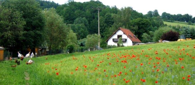 So wünschen sich die Menschen Wiesen und Äcker: artenreich, bunt, blühend - ein Lebensraum für Insekten und damit für viele Pflanzen und Tiere. Das Foto entstand am Ortsrand von Schneidenbach.