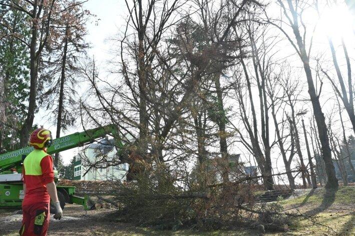 Vorsicht - Baum fällt!