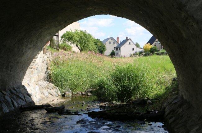 Grün überwuchert die Wisenta im Stadtgebiet von Mühltroff. Der Wasserstand ist dramatisch gesunken.