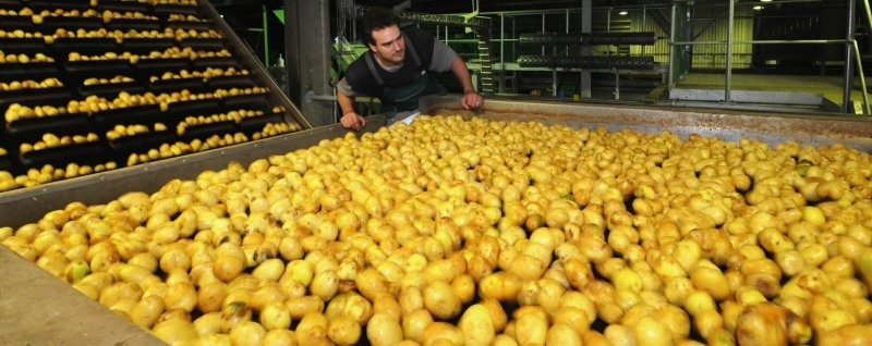 """<p class=""""artikelinhalt"""">Ronny Peters überwacht die automatisierten Arbeiten an der Kartoffel-Waschanlage bei Friweika in Weidensdorf.</p>"""
