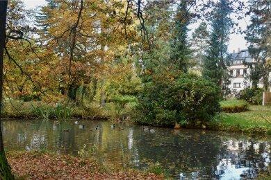 Am Seerosenteich im Stadtpark in Limbach-Oberfrohna sind dieses Jahr Bauarbeiten geplant.
