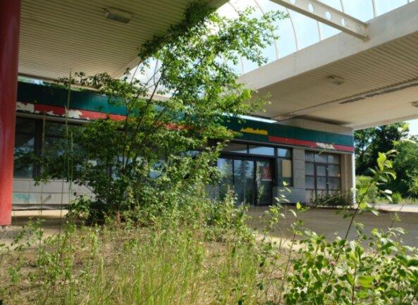Eine Atmosphäre fast wie in einer Tropenhalle. Überall auf dem einstigen Tankstellengelände an der Friedensstraße schießt das Grün in die Höhe.
