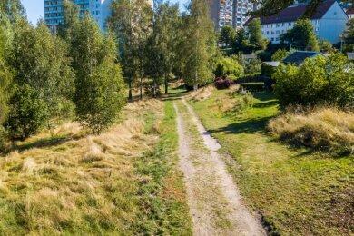 Auf der Grünfläche zwischen Solinger Straße und Kohlweg auf dem AuerEichert soll künftig seltener gemäht werden.