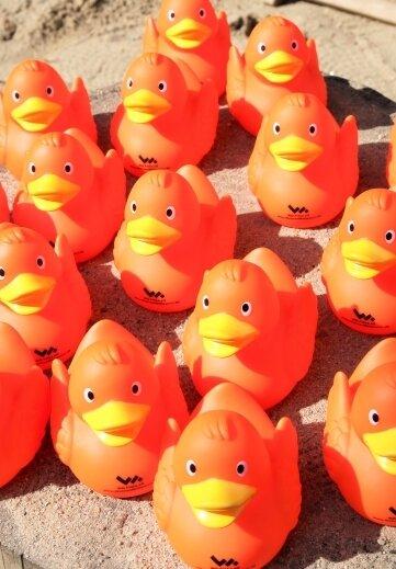 Diese Enten schwimmen am Sonnabend um die Wette.