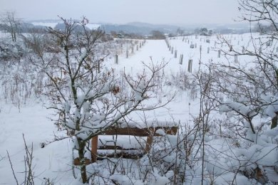 Die Streuobstwiese nahe Kloschwitz zeigte sich in den vergangenen Wochen tief verschneit. Ungeachtet dessen ist bereits für den 1. März der Baubeginn für die neue Scheune geplant.