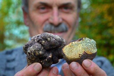 Pilzberater Frank Demmler präsentiert zwei der in Bernsbach gefundenen Sommertrüffeln.