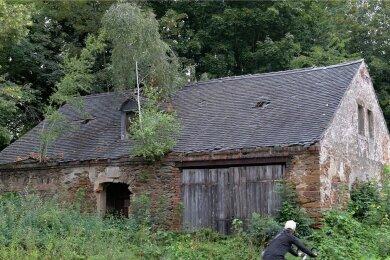 Die Natur hat sich dieses Grundstück samt Gebäude an der Kirchgasse 32 in Brand-Erbisdorf zurückerobert. Bäume wachsen sogar aus dem Dach des Hauses.