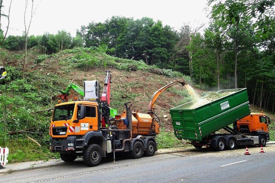 Im Auftrag der Firma Mitnetz werden in Steinpleis Bäume gefällt, die in den Sicherheitsbereich von Stromleitungen ragen.