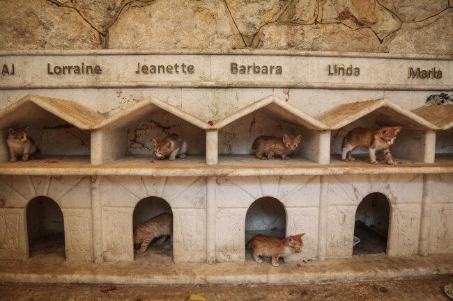 Katzen laufen durch ihre Unterkünfte in Ernesto's Cat Sanctuary, das Tierretter Alaa in  Kafr Naya betreibt.