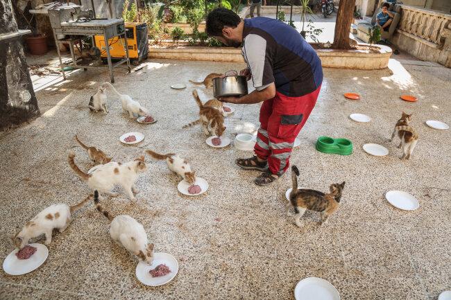 Mohammed Alaa al-Jaleel füttert gerettete Katzen im Ernesto's Cat Sanctuary, das er mit Unterstützung von Spendern in Kafr Naya betreibt.