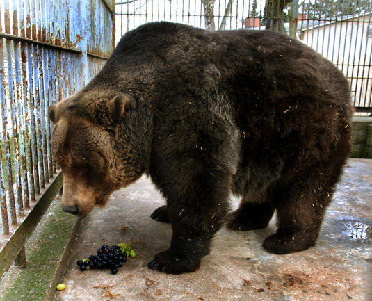 Wenige Wochen zuvor hatte der Zoo bereits den Tod des Braunbären Ingo zu beklagen.