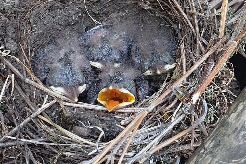 Die Jungen waren immer hungrig.