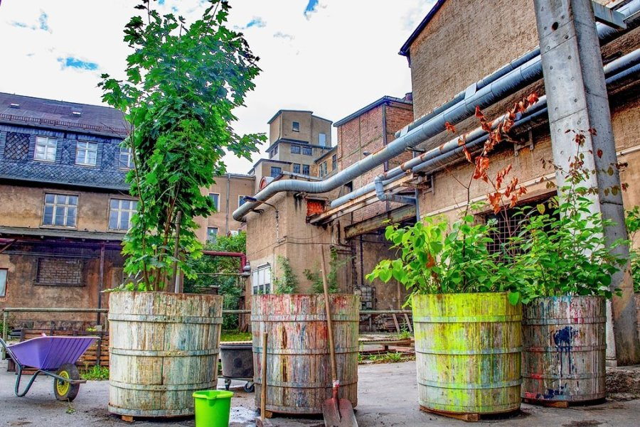 Die Wände sind noch grau. Die alten Farbbottiche wurden aber schon aus dem Gebäude geholt, im Hof platziert und bepflanzt. Helfer und Unterstützer haben seit Wochen das Gelände für die Künstler und Besucher hergerichtet.