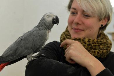 Mitarbeiterin Lisa Härtel ist im Freiberger Tierpark für die Exoten verantwortlich, hier mit Graupapagei Bubi.