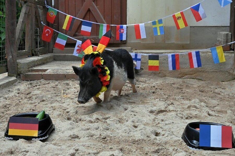 Schnurstracks ging Glücksschwein Rudi zum Napf mit der deutschen Nationalflagge. Ein gutes Omen?