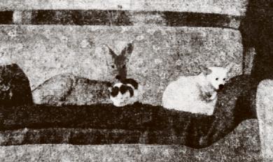 Hund, Katze und Reh vereint auf einem Sofa. Ein 60 Jahre alter Schnappschuss von der Winselburg bei Mühlleithen.