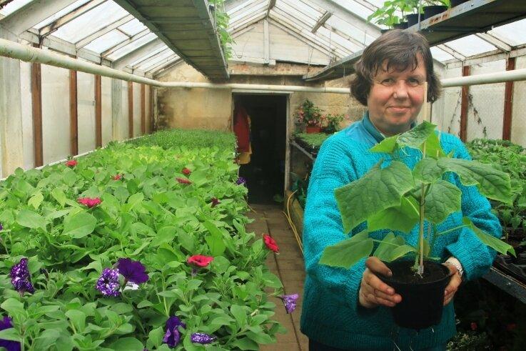 Auf zwei Etagen drängen sich bei Gärtnerin Sabine Popp bereits die Sommerblumen und Gemüsepflanzen, die bisher noch nicht ins Kaltgewächshaus umziehen konnten.