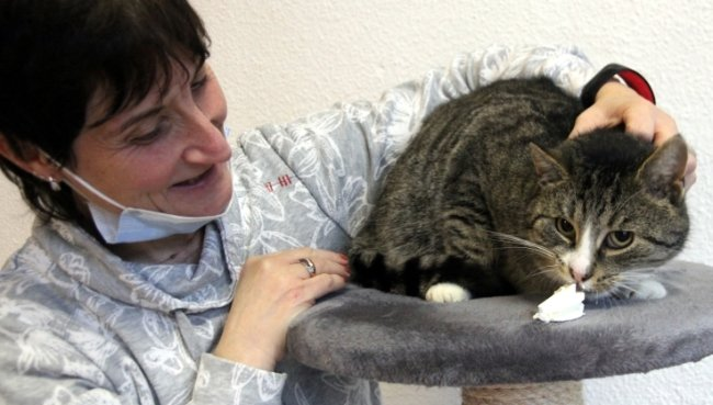 Gismo fühlt sich im Tierheim nicht wirklich wohl. Diana Glöckner und ihre Mitstreiter hoffen, der Kater findet bald ein neues Zuhause.