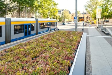 Eine Straßenbahnhaltestelle in Leipzig. Unter diesem bunt blühenden Beet warten die Fahrgäste.