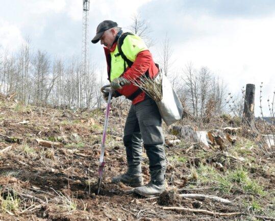 Ein Waldstück bei Posseck wird unter anderem mit Bergahorn und Vogelkirsche wieder aufgeforstet. Jörg Eckhardt bringt mit einem Spezialspaten die Setzlinge in den Boden.