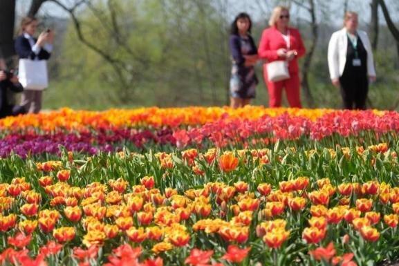 Besucher der sächsischen Landesgartenschau stehen vor Blumenbeeten.