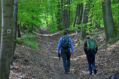 Wandern, Spazierengehen, Radfahren, Joggen - die Sachsen gehen oft in den Wald. Nur fünf Prozent tun es nie.