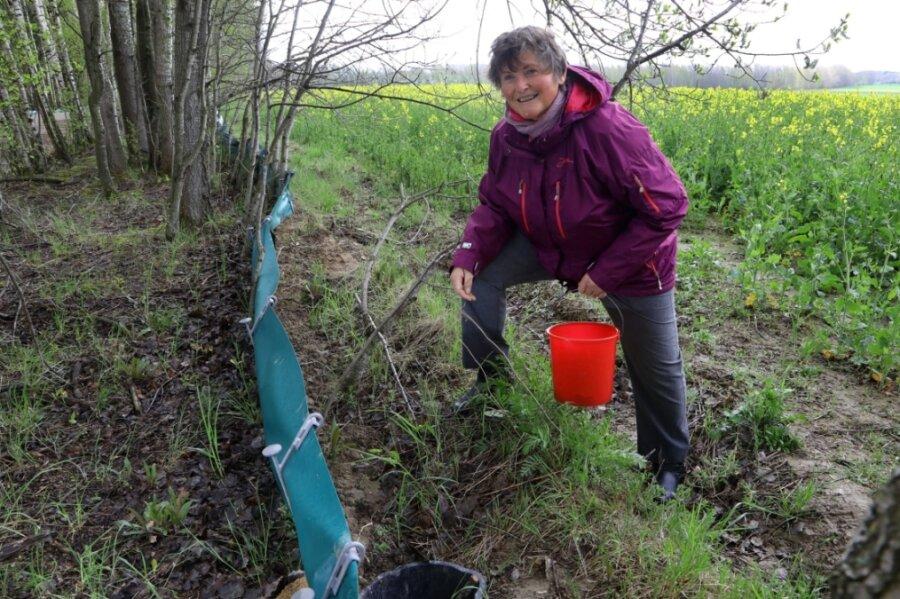 Monika Glöckner kontrolliert täglich am Krötenzaun in Callenberg 38 eingegrabene Eimer. Die Kröten bringt sie auf die andere Seite des Radweges, damit diese sicher zu ihrem Laichgewässer gelangen.
