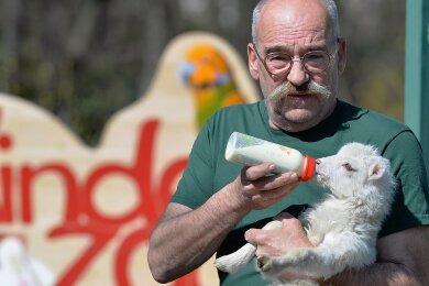 Der Freiberger Tierparkchef Peter Heinrich und sein Team hoffen, dass bald wieder Besucher in den Minizoo kommen dürfen. Auf dem Foto füttert Heinrich gerade das sieben Tage alte Skuddenmädchen Hermine, das er per Hand aufzieht. Das Zicklein darf mit zu ihm nach Hause - auch Ostern.